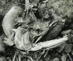 """Cadáver do """"Homem-Mariposa"""" encontrado em 2001 perto dos corpos de três crianças desaparecidas desde 1986 (Foto via Mothmen.us)"""